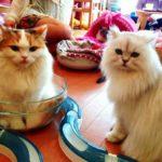 В Женеве появится бар с кошками